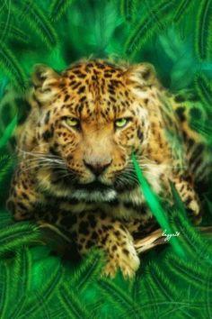 Красавец леопард в траве