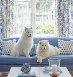 36 Samoyed Saturday Samoyed Photos Who doesnt love cute dogs and Samoyed are some of the cutest. Cute Dogs And Puppies, Baby Dogs, Pet Dogs, Dog Cat, Doggies, Cute Funny Animals, Cute Baby Animals, Animals And Pets, Beautiful Dogs