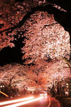 The Heiwa Dori (Ave.), Ibaraki Japan, by Arlxxx
