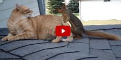 This Frisky Squirrel Wrestling With a Family's Cat is Too Funny