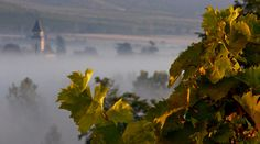 A The historical #wine region of #Tokaj and its environment http://www.itshungarian.com/hungarian-culinaria/drops-of-pure-gold-tokay/