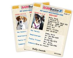Get a Free Bark Buckle Up Pet Safety Kit