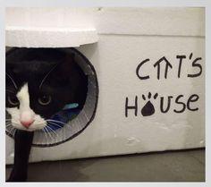Elena Portero, del proyecto Cat`s House , una casa para todos los gatos. http://enelnombredelgato.com/chica-gatos-cats-house-casas-para-todos-los-felinos/