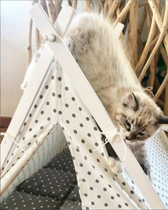 Cat playing with the teepee. Perfect bed for cat by Dog And Teepee Bed Tent, Teepee Tent, Tents, Cat Teepee, Large Tent, Take A Nap, White Dogs, Cool Pets, Dog Houses