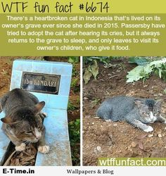 WTF Facts : funny, interesting & weird facts — Cat refused to leave its owner's grave Animals And Pets, Funny Animals, Cute Animals, Farm Animals, Crazy Cat Lady, Crazy Cats, Spring Decoration, Wtf Fun Facts, Random Facts