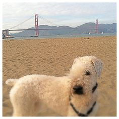 Kailee at Crissy Field