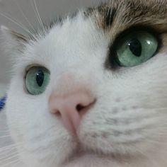 Lola hermosa #gatitolindo #mundogatuno #ilovemycat #kitty #lovecats #cat #catsoninstagram #cats_of_instagram #catoftheday #catstagram #bestfriends #animallover #adorable #miau #miauw #instalike #instapic #instaphoto #catoftheday