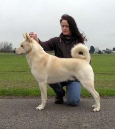 Image detail for -chisholmavi - Canaan Dog Breeders Uk