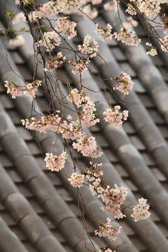 Pin By Color Palette Thyme On Peach Grey Hanami Sakura Cherry Blossom Color