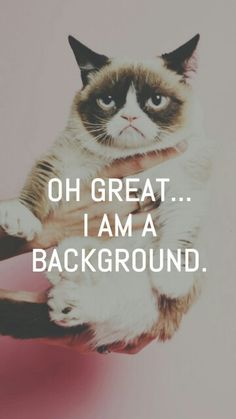 Hahah Grumpy cat wallpaper!!