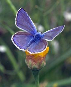 Benvenuta primavera Butterfly Kisses, Butterfly Flowers, Butterfly Wings, Butterflies Flying, Beautiful Butterflies, Garden Of Lights, Bee Friendly Plants, Wild Birds, Outdoor Gardens