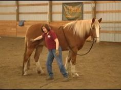 ▶ Five Fundamentals of Horse Training Part 1 of 2