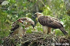 EDGE :: Bird Species Information