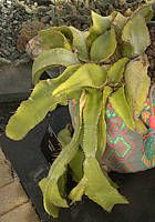 The Cactus Page - Family Cactaceae Succulent Plants, Planting Succulents, Cacti, Woodpecker Feeder, Cactus Names, Barrel Cactus, Yellow Flowers, Habitats, Cactus Plants