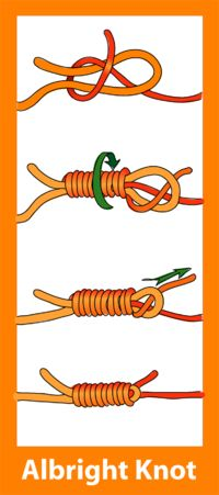 FINALES http://upload.wikimedia.org/wikipedia/commons/thumb/f/f6/Arbor_knot_diagram.png/200px-Arbor_knot_diagram.png