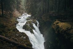 hikewhileyoucan:givncvrlos: the mood of sol duc falls (by manyfires) nature
