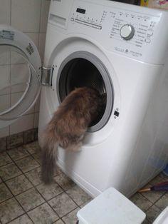 Ff de wasmachine onderzoeken