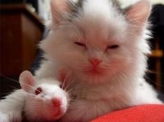 baby cat and mouse are friends