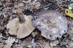 excursie met de mycologische vereniging