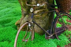 A rickety blue-and-rust metal bike leans against the knobby trunk of a mossy tree.The front tire is nearly flat and the bike creaks as if it hasn't been used since the week of Creation. That makes me feel better about stealing it. - #ATime2Speak (#OutofTimeSeries by @NadineBrandes)