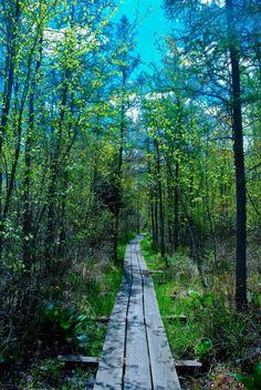 4. Spruce Lake Bog (Fond du Lac County)