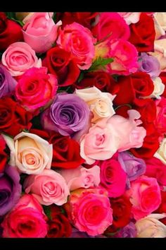 Bouquet of beautiful gold Beautiful Rose Flowers, Beautiful Gif, Romantic Roses, Beautiful Flowers, Pink Roses, Pink Flowers, Flower Meanings, Rainbow Roses, Language Of Flowers