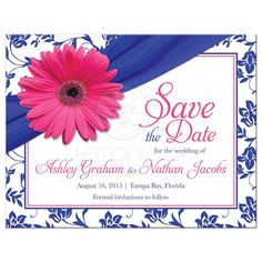​Pink gerber daisy royal blue damask and ribbon wedding save the date postcard