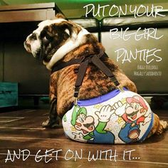 """Baggy Bulldogs Hope you're doing well..From your friends at phoenix dog in home dog training""""k9katelynn"""" see more about Scottsdale dog training at k9katelynn.com! Pinterest with over 21,600  followers! Google plus with over 385,000 views! You tube with over 500 videos and 60,000 views!! LinkedIn over 10,900 associates! Proudly Serving the valley for 12 plus years! now on instant gram! K9katelynn"""