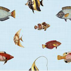 Removable Wallpaper - Marine Life
