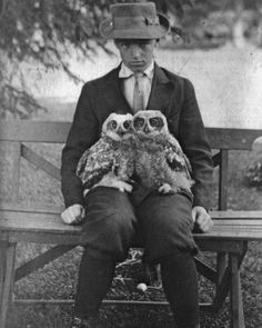 Boy with Owls Vintage 1910 Edwardian Boyhood by EclecticForest