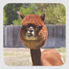 It's time for #FunnyTuesday! Tag a friend with a bad haircut 😂 Have a wonderful rest of the week! Farm Insurance, Rest, Facts, Animals, Funny, Instagram, Animales, Animaux, Animal