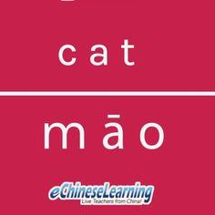 Comment and write the Chinese character!  #catsofinstagram #chinese #chinesecharacters #mandarin #languagelearners #languagelearning #learningchinese #learningchineseisfun #globaldaily #worldtravelers #wordoftheday