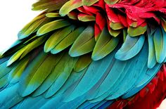 Macaw feathers~