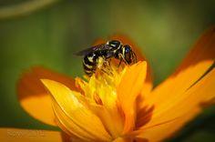 Morning Bee by Roy Irwan, via 500px