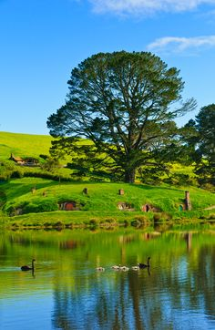 Hobbiton,New Zealand (The Lord Of The Rings Movie Set)