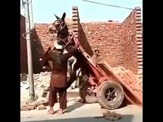 that's how to unload a donkey cart