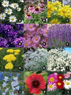Flowers for a cutting garden that bloom from late spring to early fall.