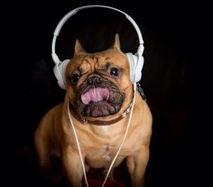Milu loves music