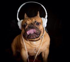 Milu loves music