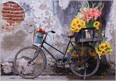 Bicicletas para todos los gustos | Estilo Escandinavo