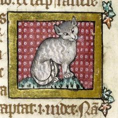 """Thread by """"Thread: Did you know cats feature in early medieval law? The Welsh Laws of Hywel Dda listed the qualities o""""that it not devour its kittens, and that it have ears, eyes, teeth and claws, and that it be a good mouser. Medieval World, Medieval Art, Medieval Drawings, Medieval Manuscript, Illuminated Manuscript, Illuminated Letters, Peterborough, Illustrations, Illustration Art"""