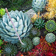 Succulents can be a gorgeous, low-maintenance alternative to flowers.