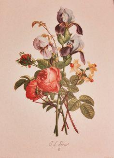 Vintage Flower Print Art JeanLouis Prevost by TypicallyDifferent, $9.50