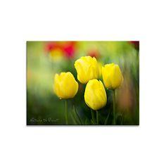 Frühlingsbild: Welch zauberhaftes Leuchten