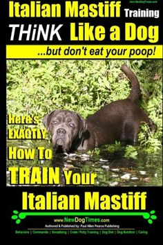 Italian Mastiff Italian Mastiff Training  Think Like a Dogbut dont eat your poop Heres EXACTLY How to TRAIN Your Italian Mastiff Volume 1 ** Find out more about the great product at the image link. (Note:Amazon affiliate link) #DogTraning