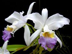 Con más de un millar de género y más de 30.000 especies, las orquídeas nos ofrecen una enorme variedad de flores en muy diversas formas y colores. Pero hay que conocer bien sus necesidades para no …