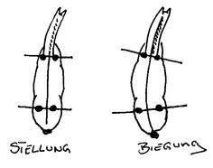 Stellung und Biegung unterscheiden - Ein Pferd stellen