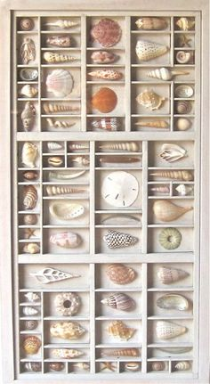 seashell art composition in a printers type box