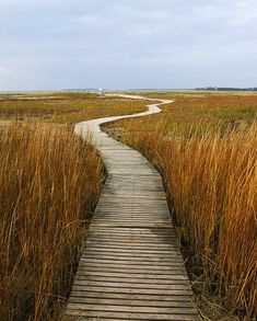 Cape Cod -- the bay side