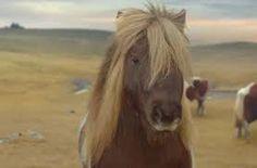 dancing pony - Google Search